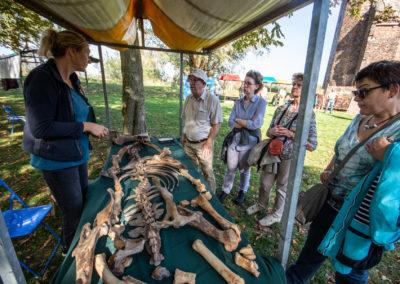 Deborah Paalman van Dordrecht Ondergronds vertelt bijzonder bottenvondsten in de Dordtse bodem - Archeologiedag bij Huis te Merwede (13 okt 2018)